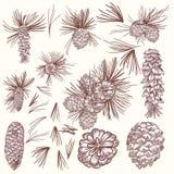 Duża kolekcja wektorowe jedlinowego drzewa kukurudze dla boże narodzenie projekta ilustracja wektor