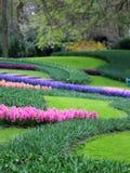 Duża kwota purpurowi błękit menchii hiacynty Fotografia Royalty Free