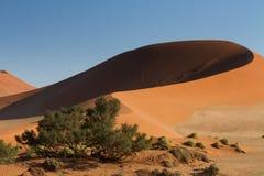 Duża ojczulka piaska diuna w wczesnego poranku świetle Fotografia Stock