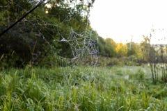 Duża pająk sieć z rosa kroplami Obrazy Stock