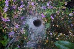 Duża pajęczyna między drzewem Fotografia Stock