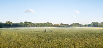 Duża panorama grainfield w ranku słońcu z mgłą Bayreuth, Niemcy Zdjęcie Royalty Free