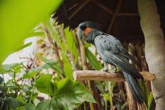 Duża piękna kolorowa papuga Obraz Stock