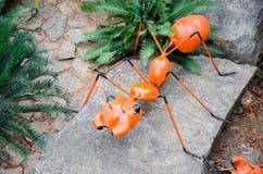 Duża pomarańczowa mrówka Obrazy Royalty Free