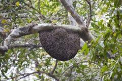 Duża rodzina pszczoły fotografia royalty free
