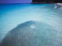 Duża szkoła sardele w płytkiej wodzie plażą obraz stock