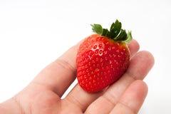 Duża truskawka w ręce Fotografia Royalty Free