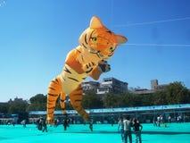 Duża Tygrysia kania przy Międzynarodowym kania festiwalem, Ahmedabad Fotografia Royalty Free