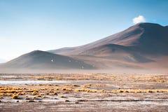 Duża wysokość krajobrazy w Altiplano plateau, Boliwia zdjęcie royalty free