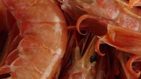 Duże Argentyńskie krewetki zdjęcie wideo