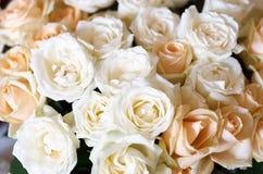 duże grupy wielokrotności różowe róże Zdjęcie Stock