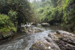 Duże skały w rzece w zielonym lasowym dżungla terenie Obrazy Stock