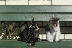 Dużego kota i figlarki obsiadanie na zielonej ławce Zdjęcia Royalty Free