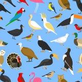 Dużego setu tropikalni, domowi i inni ptaki, royalty ilustracja