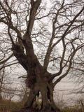 dużego zmroku naga gałęziasta drzewna jesień chmurzy markotną śmierć zdjęcie stock