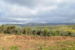 Dużej wysokości moorland góra Kenja zdjęcie stock