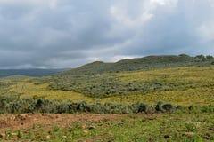 Dużej wysokości moorland góra Kenja zdjęcia royalty free