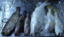 Dużo łowią w Targowym schronieniu Fotografia Stock