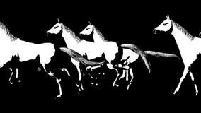 Dużo biega konie Alfa kanał Alfa matte 4K zdjęcie wideo