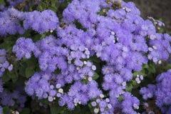 Dużo i naturalni kwiaty zamknięci up na ulicach - świezi kwiaty, ogrodowa dekoracja Fotografia Stock