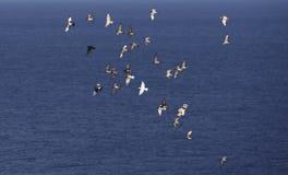 Dużo lata gołębie na błękitnym dennym tle fotografia stock