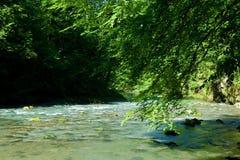 dużo puszczy źródła rzeki Obraz Stock