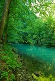 dużo puszczy źródła rzeki Zdjęcia Stock