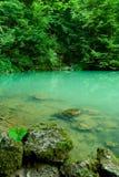 dużo puszczy źródła rzeki Fotografia Royalty Free