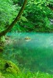 dużo puszczy źródła rzeki Zdjęcie Stock