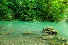 dużo puszczy źródła rzeki Zdjęcia Royalty Free
