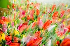 Dużo skaczą bukiety tulipany obraz royalty free