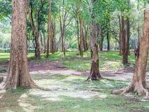 Dużo zielenieją drzewa w parku Zdjęcie Royalty Free