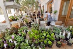 Dużo zielenieją kaktusy w garnkach i sukulentach na gablocie wystawowej uliczny kwiatu sklep Obrazy Stock