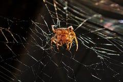 Duży Żółty pająk zdjęcie stock