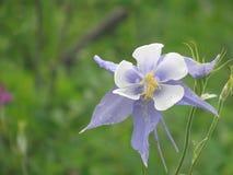 Duży łąka kwiat Zdjęcie Royalty Free