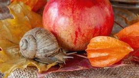 Duży ślimaczka czołganie na jesieni ulistnieniu jabłko w ogródzie obraz royalty free