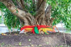 Duży święty drzewo Zdjęcia Royalty Free