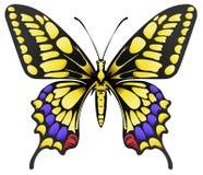 Duży żółty machaon motyl odizolowywający na bielu Obrazy Stock