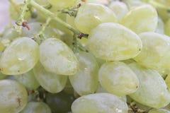 duży biały słodki winogrono dla jeść i deseru obrazy stock
