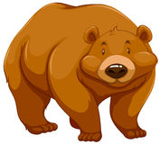 duży brązowy niedźwiedź Fotografia Royalty Free
