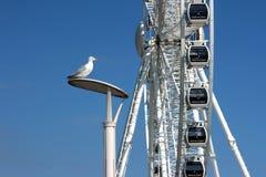 Duży Brighton Koło Zdjęcia Royalty Free