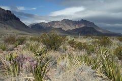 duży chyłu park narodowy fotografia stock