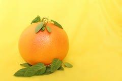 Duży czerwony grapefruitowy z nowymi liśćmi Zdjęcie Royalty Free