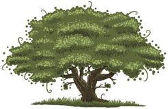 Duży dębowy drzewo ilustracja wektor