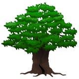 Duży dębowy drzewo Zdjęcie Royalty Free