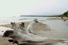 Duży Driftwood drzewo na plaży w Północnym Ontario Obrazy Stock