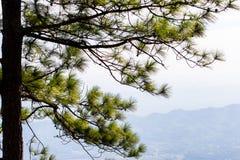Duży drzewny sylwetka zmierzchu nieba tło Fotografia Stock