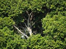 Duży drzewo, krzaków Otaczać Zdjęcia Stock