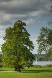 Duży drzewo na jeziornych głębiach Zdjęcia Royalty Free