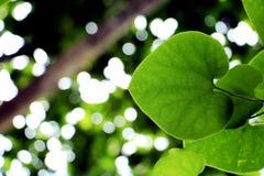Duży drzewo pod nieba i zieleni liśćmi Zdjęcie Royalty Free